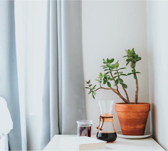 Plant pot next to curtains